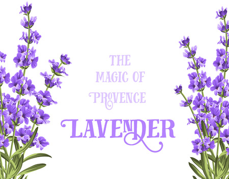violet flowers: The lavender elegant card with frame of flowers and text. Lavender garland for your text presentation. Label of soap package. Label with lavender flowers.