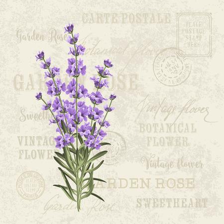 fiori di lavanda: L'elegante carta lavanda. modello di vettore sfondo cartolina d'epoca per invito a nozze. Etichetta con fiori di lavanda.