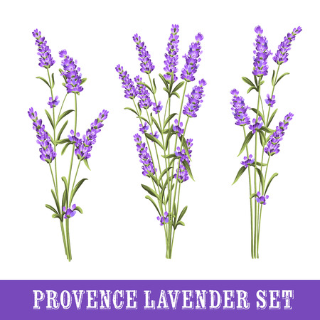 Set of lavender flowers elements. Collection of lavender flowers on a white background. Vector illustration bundle.