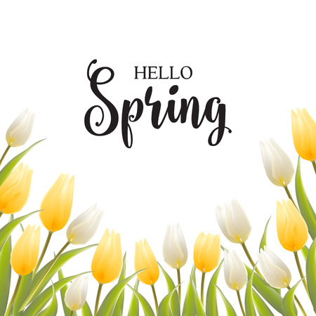 chik: Tulip bouquet over white background with custom text Hello Spring. Vector illustration. Illustration