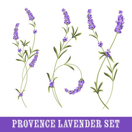 Set van lavendel bloemen elementen. Het verzamelen van lavendel bloemen op een witte achtergrond. Botanische illustratie. Vintage-stijl. Geschenken van papier en textiel. Vector illustratie bundel.