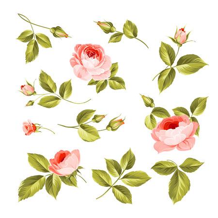 vintage rose: Vintage flowers set. Wedding flowers bundle. Flower collection of watercolor detailed hand drawn roses.