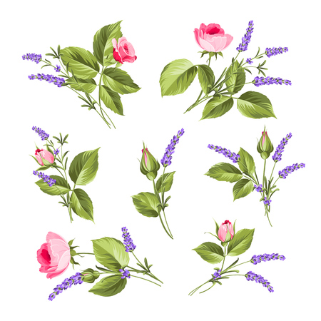 lavender bushes: Vintage flowers set. Wedding flowers bundle. Flower collection of watercolor detailed hand drawn roses. Collection of roses and lavender flowers on a white background.