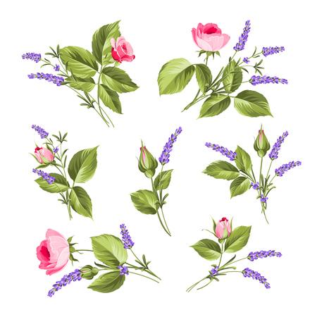 establecen Flores de la vendimia. Flores de la boda paquete. colección de flores de rosas dibujadas a mano acuarela detallada. Colección de rosas y flores de lavanda en un fondo blanco.