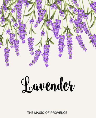 Bunch of Lavendelblüten auf einem grauen Hintergrund. Label-Seife-Paket. Lavendel-Karte für Papier, Etiketten und anderen Druck- oder Web-Projekten. Beschriften mit Lavendelblüten. Vektor-Illustration. Standard-Bild - 50268339