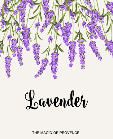 Bunch of lavender flowers on a gray background. Label of soap package. Lavender card for paper, label and other printing or web projects. Label with lavender flowers. Vector illustration.