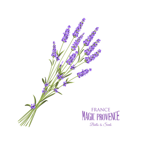 The lavender elegant card with bouquet of flowers and text. Lavender garland for your text presentation. Label of soap package. Label with lavender flowers. Vector illustration. Vettoriali