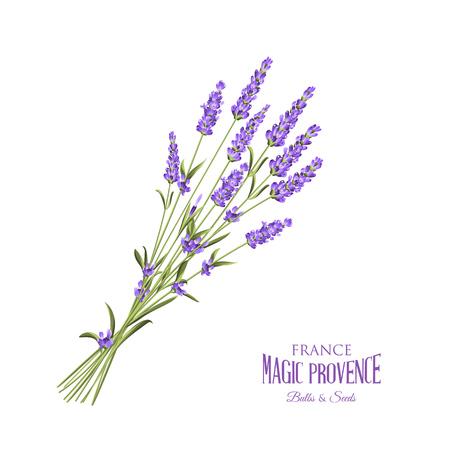La carte élégante de lavande avec bouquet de fleurs et texte. Lavande guirlande pour votre présentation du texte. Étiquette du paquet de savon. Étiquette de fleurs de lavande. Vector illustration.
