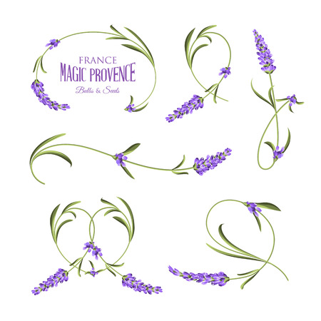 Set of lavender flowers elements. Botanical illustration. Collection of lavender flowers on a white background. Lavender hand drawn. Watercolor lavender set.  Lavender flowers isolated on white background. Vettoriali