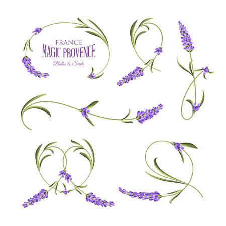 fiori di lavanda: Set di fiori di lavanda elementi. illustrazione botanica. Raccolta di fiori di lavanda su uno sfondo bianco. disegnato Lavanda mano. Insieme dell'acquerello lavanda. fiori di lavanda isolati su sfondo bianco.