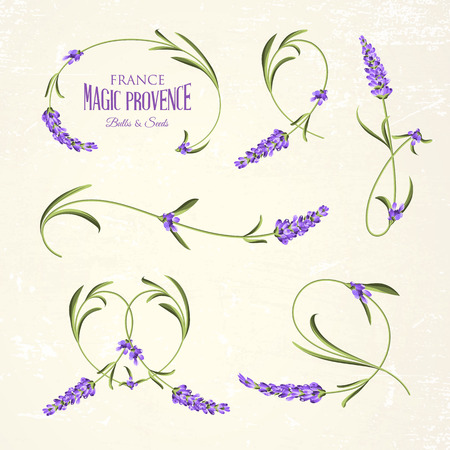 french countryside: Vintage set of lavender flowers elements. Botanical illustration. Collection of lavender flowers on a white background. Lavender hand drawn. Watercolor lavender set.  Lavender flowers isolated on white background. Illustration
