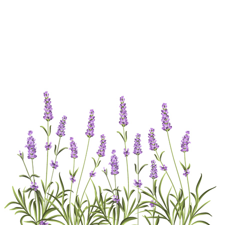 Wreath of lavender flowers in watercolor paint style. The lavender elegant card with frame of flowers and text. Lavender garland for your text presentation. Vector illustration.