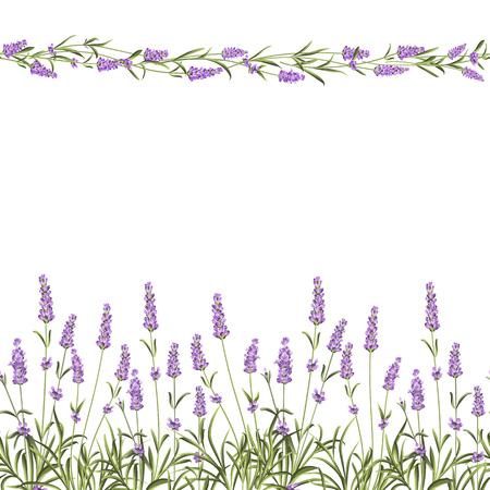 La línea de marco sin fisuras lavanda. Manojo de flores de lavanda sobre un fondo blanco. Ilustración del vector.