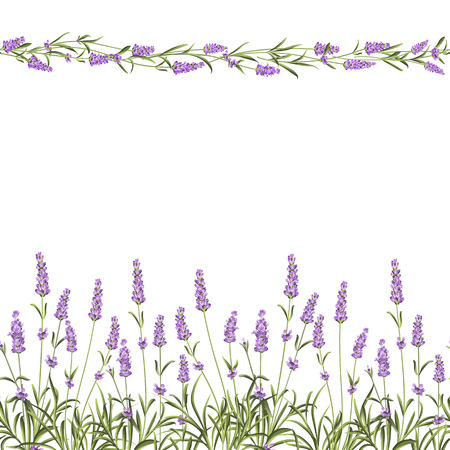 The Lavender Seamless frame line. Bunch of lavender flowers on a white background. Vector illustration. Stock Vector - 50920327