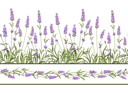 lavender: The Lavender Seamless frame line. Bunch of lavender flowers on a white background. Vector illustration.