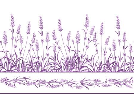 The Lavender Seamless frame line. Bunch of lavender flowers on a white background. Vector illustration. 免版税图像 - 50920413