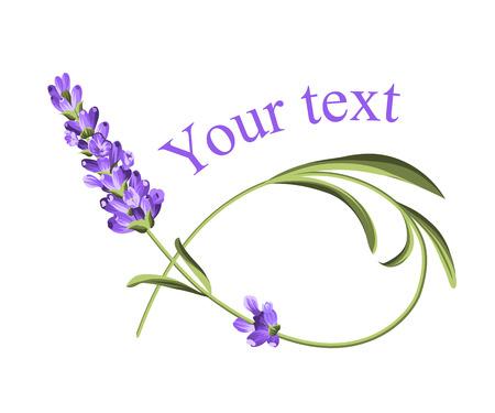 Seu modelo de texto. Quadro da flor da alfazema no estilo da pintura da aguarela. O cartão elegante da alfazema com flor e texto. Alfazema para sua apresentação de texto. Ilustração vetorial