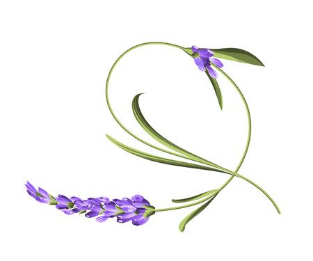 Bend fiore singolo. Impressionante fiori di lavanda curva su sfondo bianco. Illustrazione vettoriale.