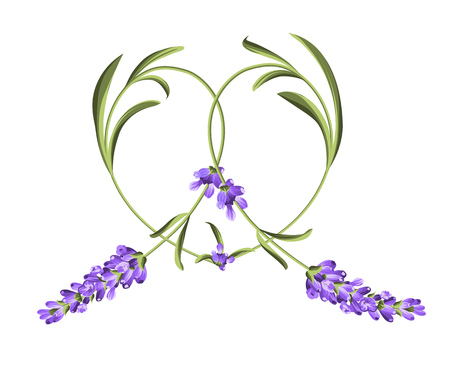 Heart frame of lavender flower. Abstract heart. Vector illustration.