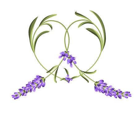 purple wreath: Heart frame of lavender flower. Abstract heart. Vector illustration.