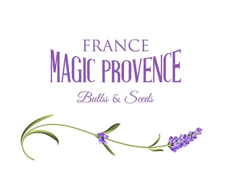 Lavender étiquette signe. Étiquette de fleurs de lavande sur un fond blanc. Étiquette du paquet de savon. Vector illustration. Vecteurs