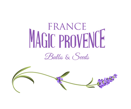 Lavender sign label. Label of lavender flowers on a white background. Label of soap package. Vector illustration.