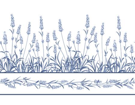 lavanda: La línea de marco sin fisuras lavanda. Manojo de flores de lavanda sobre un fondo blanco. Ilustración del vector.