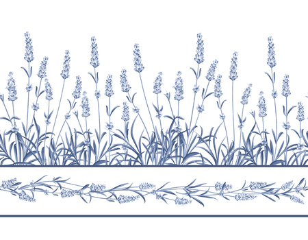 The Lavender Seamless frame line. Bunch of lavender flowers on a white background. Vector illustration.