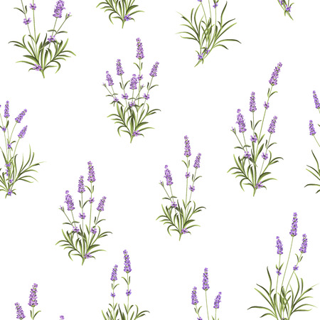 The Lavender Seamless pattern. Bunch of lavender flowers on a white background. Vector illustration. Vectores