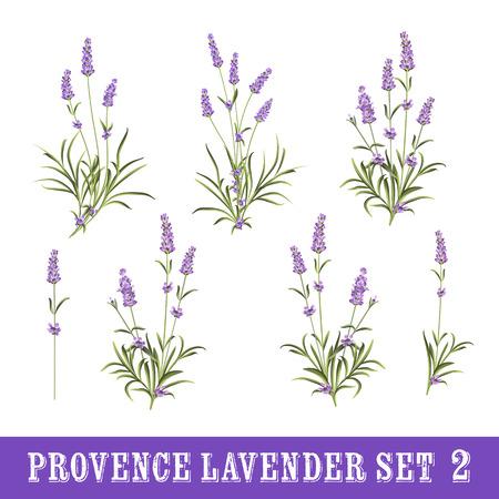 ラベンダー花要素のビンテージ セット。植物のイラスト。白い背景の上のラベンダーの花のコレクション。ラベンダー手描き。ラベンダー水彩セッ