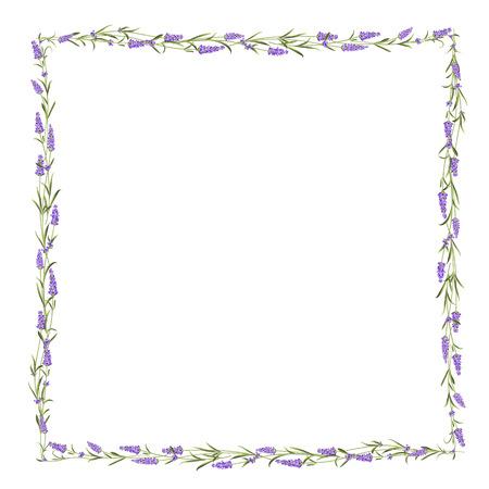 lavender oil: The Lavender frame line.