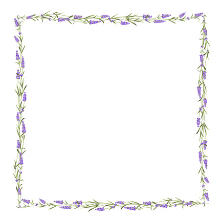 The Lavender kader lijn. Stock Illustratie