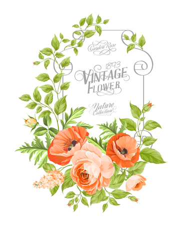 vintage card: Vintage card background with beautiful poppies. Vector illustration.