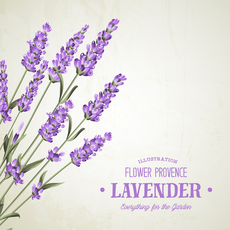 The lavender elegant card. Bouquet of lavender flowers in watercolor paint style. The lavender elegant card with frame of flowers and text. Lavender garland for your text presentation. Vetores
