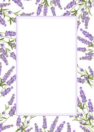 ラベンダー フレーム ライン。白地ラベンダー花の束。ベクトルの図。