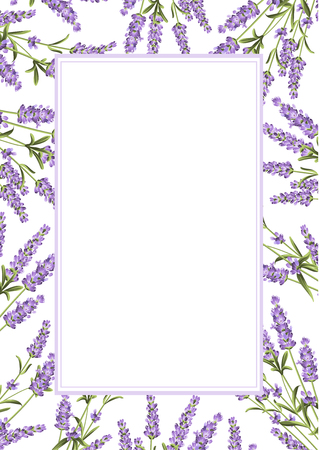 The Lavender frame line. Bunch of lavender flowers on a white background. Vector illustration. Vettoriali