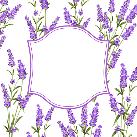 violet flowers: The Lavender frame line. Bunch of lavender flowers on a white background. Vector illustration. Illustration