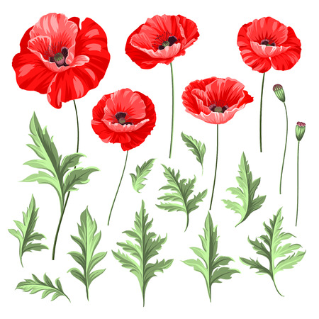 Vintage poppy set. Wedding flowers bundle. Flower collection of watercolor detailed hand drawn poppies. Vector illustration.