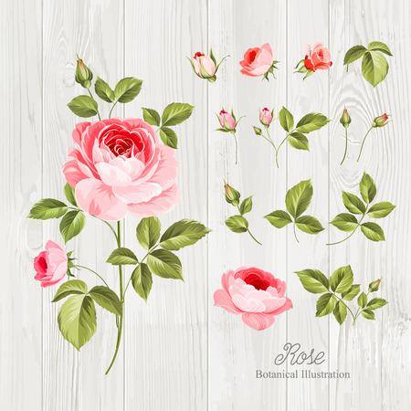 conjunto: Flores de la vendimia que se distribuyen en el escritorio de madera. Flores de la boda paquete. colección de flores de rosas dibujadas a mano acuarela detallada. Ilustración del vector.