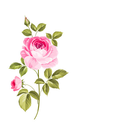 The Blooming Rose. Botanical vector illustration. Awesome single flower. Vettoriali
