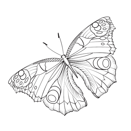 Flying butterfly card. Beautiful black and white butterfly isolated over white.