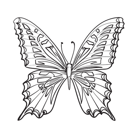 butterfly: Flying butterfly card. Beautiful black and white butterfly isolated over white.