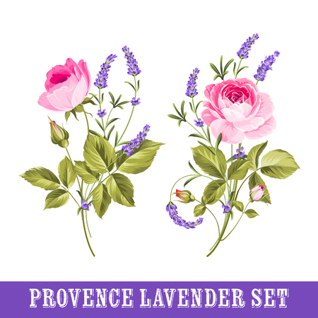 french countryside: Vintage set of lavender flowers elements