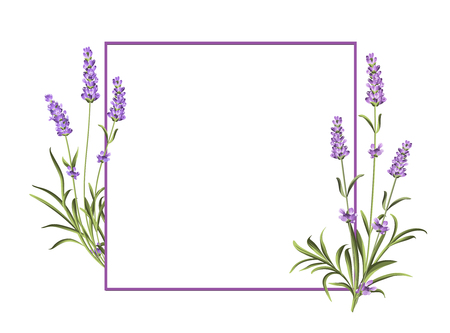 Bunch of lavender flowers on a white background. Marriage invitation card template. Vector illustration.