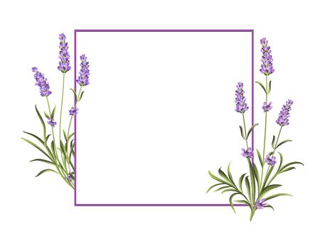 El manojo de flores de lavanda sobre un fondo blanco. Plantilla de tarjeta de invitación matrimonio. Ilustración del vector.