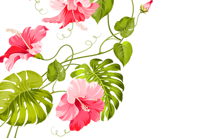 Tropical flower garland isolated over white background. Vector illustration.