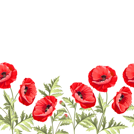 opium poppy: I love you card. Bunch poppy flowers on a white background. Poppy card for paper, label and other printing or web projects. Label with poppy flowers. Vector illustration.