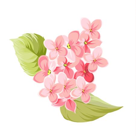 Fleurs lilas pourpre de Syringa isolé sur fond blanc. Fleurs de printemps. Vector illustration. Vecteurs