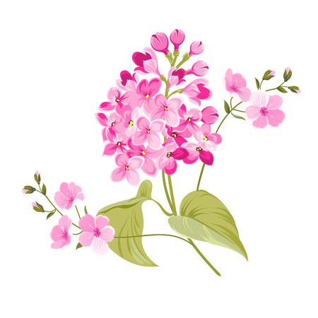Flores de la lila púrpura de Syringa aislados sobre fondo blanco. Flores de primavera. Ilustración del vector.