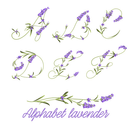 lavender flower: Set of lavender flowers elements. Collection of lavender flowers on a white background. Vector illustration bundle.
